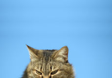 Curious cat staring. Downwards against a blue sky Stock Photo