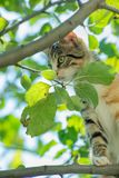 Curious cat in a tree. On a sunny day Stock Image