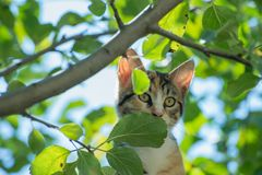 Curious cat in a tree. On a sunny day Royalty Free Stock Image