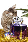 Curious cat unpacks Christmas gift Stock Images