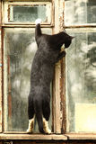Curious cat in the window. Funny black stock photo