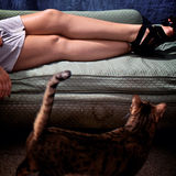 Curious cat with womans legs Stock Photography