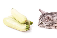 Curious cat and zucchini Stock Images
