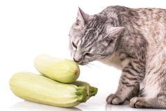 Curious cat and zucchini. Isolated on white background royalty free stock images