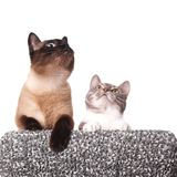 Curious cats looking up Stock Photography