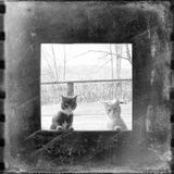 Curious cats looking through the window Royalty Free Stock Images