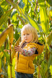 Curious child find corn in cornfield Stock Images