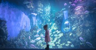 Curious child looking underwater reef landscape in marine aquarium in deep blue purple pink colors concept children curiosity and. Curious child looking stock images