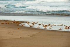Curious crabs Royalty Free Stock Photos
