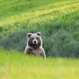 Curious cub Stock Photos