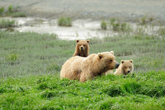 Curious Cub Stock Image
