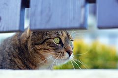Curious cute cat Royalty Free Stock Photography