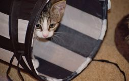 Curious cute cat in tunnel Royalty Free Stock Photography