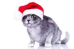 Curious cute cat wearing a santa hat Royalty Free Stock Photos