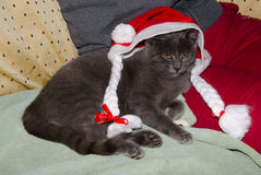 Curious cute cat wearing a santa hat Royalty Free Stock Photo