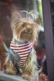 Curious Decorative Dog Stock Images