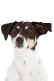 Curious dog Stock Photos