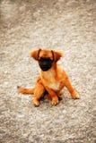 Curious Dog. A small yellow curious dog Stock Image