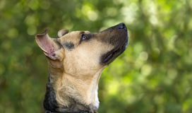 Curious Dog Looking Up Stock Images