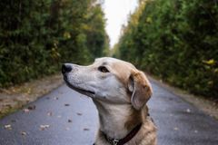 Dog looking away from camera stock image