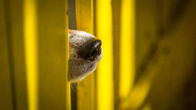 Curious dog sticking its nose through fence gap Stock Photo