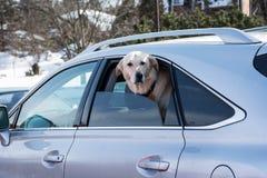 Curious dog Stock Images