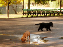 Curious dogs playing in the park Royalty Free Stock Photography