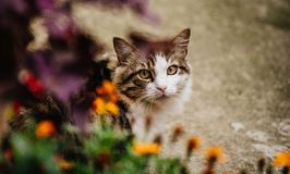 Curious domestic cat in the garden. Beautiful portrait of a cat looking at me into the garden full of flowers Royalty Free Stock Photo