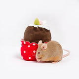 Curious domestic mouse explores plush cupcake.. The mouse has bushing whiskers and cute little pink paws. The mouse is golden. Toy capcake is brown and red with Royalty Free Stock Photography