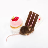 Curious domestic mouse sits between two plush toy cakes. Stock Photography