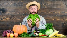 Curious farmer. bearded mature farmer. harvest festival. man chef with rich autumn crop. organic and natural food. happy. Halloween. seasonal vitamin food royalty free stock images