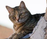 Curious Feline Stock Image