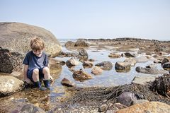 Boy exploring tide pools on New Hampshire coast. Curious Four year old boy exploring rocky tide pools on the coast of New Hampshire looking for sea life stock photography