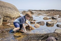 Boy exploring tide pools on New Hampshire coast. Curious Four year old boy exploring rocky tide pools on the coast of New Hampshire looking for sea life stock photo