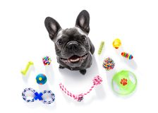 Dog with pet toys royalty free stock images