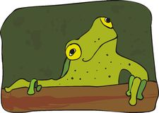 Curious frog Royalty Free Stock Photo