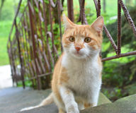 Curious ginger cat. On outdoor stairs Royalty Free Stock Images