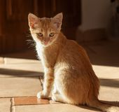 Curious ginger kitten sit on the floor in bright morning sunlight stock photo