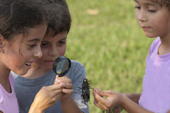 Curious Girl Looking At Beetle Through. Curious Children Looking At Beetle Through Magnifying Glass Outdoor Stock Photo