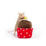 Curious golden domestic mouse explores plush cupcake. Royalty Free Stock Images