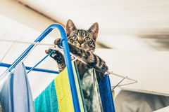 Curious gray tabby kitten on top of clothes horse Stock Photos