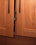 Curious grey kitten spying from cupboard Stock Photo