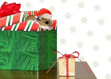 Curious Holiday Deer Mouse Stock Photos