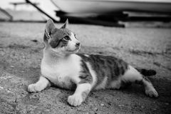 Curious homeless cat. In the seaport. Black and white stock images