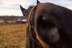 Horse looking curiously into the camera Royalty Free Stock Photos