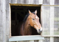 Curious Horse Stock Images