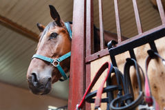 Curious horse Royalty Free Stock Images