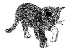 Curious kitten. Hand-drawn illustration of a kitten Royalty Free Stock Images