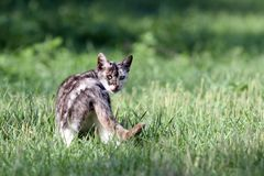 Curious kitten in the field Stock Photo