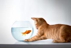 Curious kitten with goldfish Stock Photos